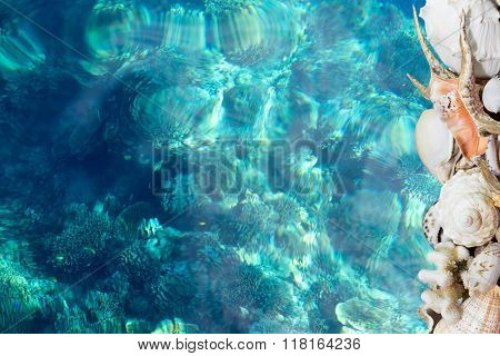 Tropical Shells And Blue Reef