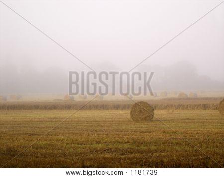 Misty Morning Hayfield