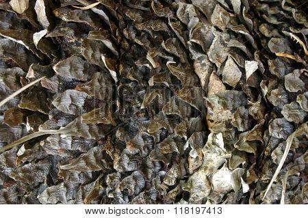 Cycad base texture