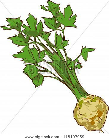 White Background Vector Illustration Of A Healthy Vegetable Celery