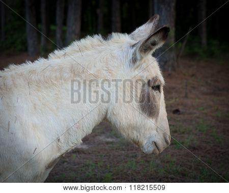 Unsatisfied Donkey 2