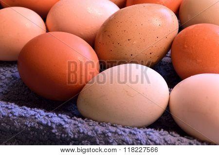 Brown Yard Eggs, Wet