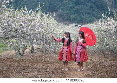 Two H'Mong ethnic girls in a flower garden in Mocchau, Vietnam.