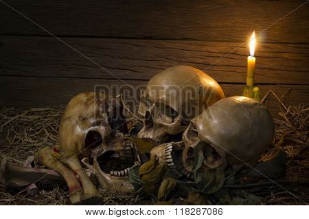 Skull And Light Candle With Dry Roses - Still Life Style