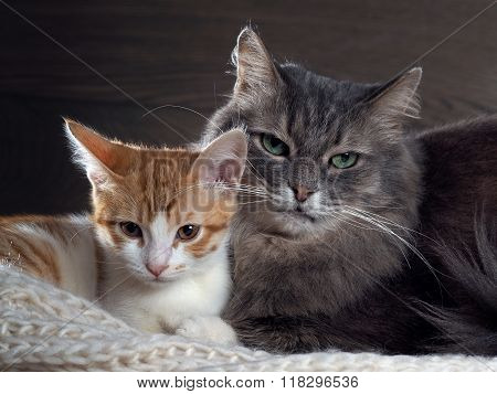Family portrait of two cats