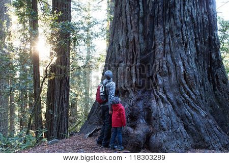 Family In Redwoods Forest