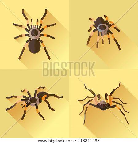 Vector Long Shadow Flat Spider Set Tarantola