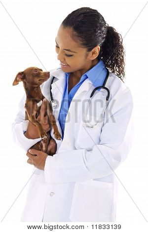 Stock image of female veterinarian with small dog over white background poster