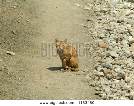 wet orange cat sit on pathway on beach poster