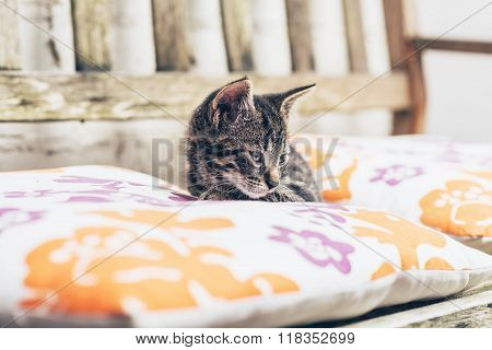 Little Kitten Resting On Comfortable Cushions
