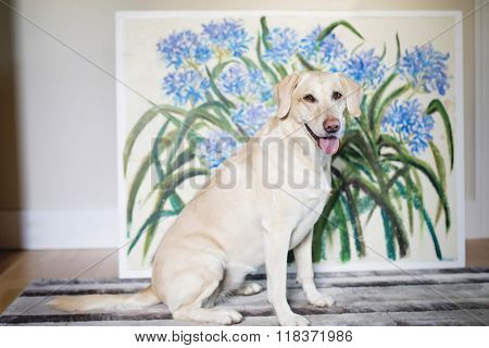 happy healthy yellow lab in front of original art