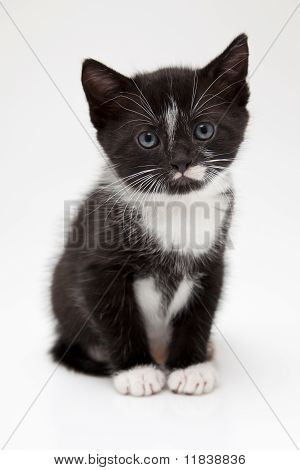 Little black kitten