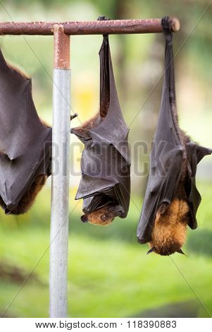 bat hanging from branch