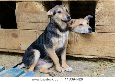 Homeless Puppy In Doghouse