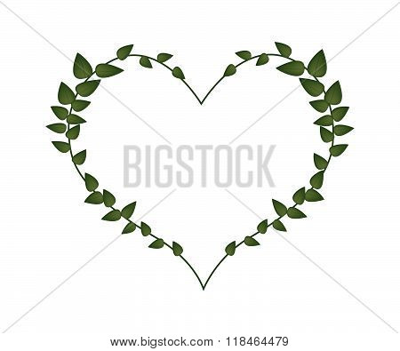 Green Vine Leaves In Lovely Heart Shape