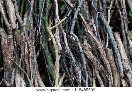 arrangement of logs