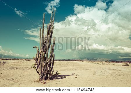 big cactuses in red desert, tatacoa desert, colombia, latin america, clouds and sand, red sand in desert
