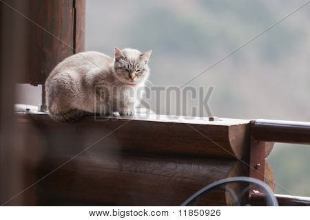 Relaxed Cat Sitting On Beam