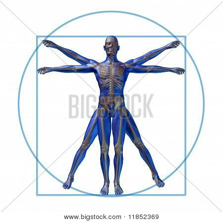 vitruvian man modern skeleton isolated x-ray medical symbol health care poster