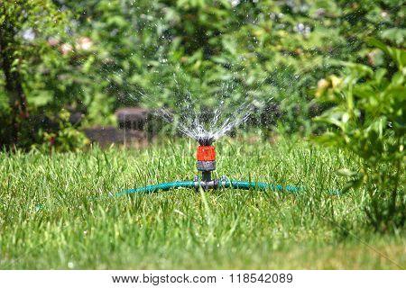 irrigate grass