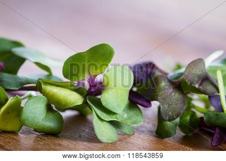close up of mixed fresh organic micro greens to use in salads or other recipes poster