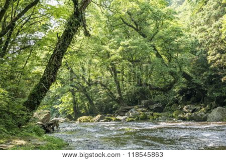 River and large forest