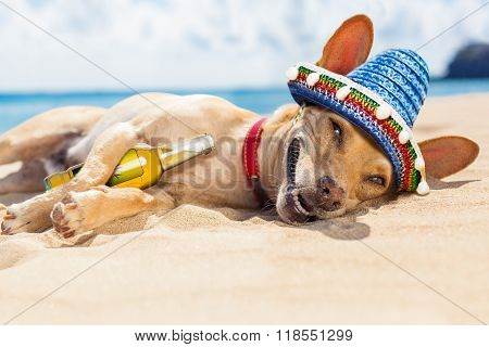 Drunk  Dog On The Beach