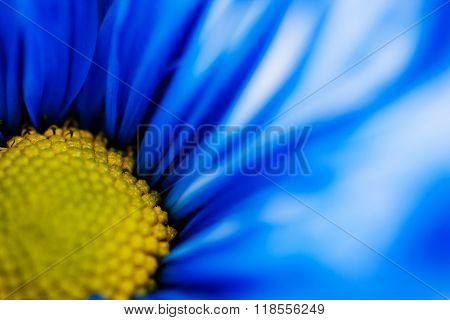 Macro View Of A Blue Daisy And Its Pistil