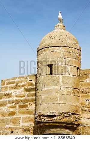 Brick In Old Construction  Bird