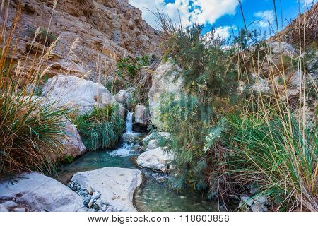 The picturesque stony gorge with noisy falls and transparent fast stream. Ein-Gedi - the reserve of Israel