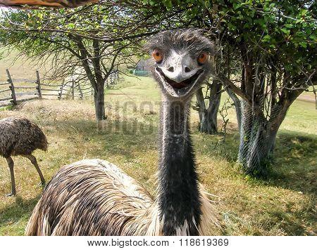 Happy Bird Ostrich Emu