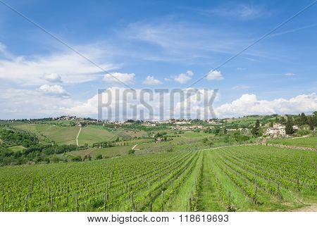Cloudy Sky In Tuscan Vineyard