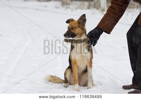 Man is ready to let dog off on a winter snowy street