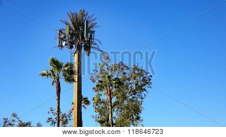 Cell Tower Camouflaged As Palm Tree