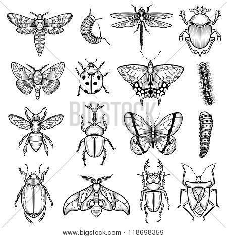 Insects Black White Line Icons Set