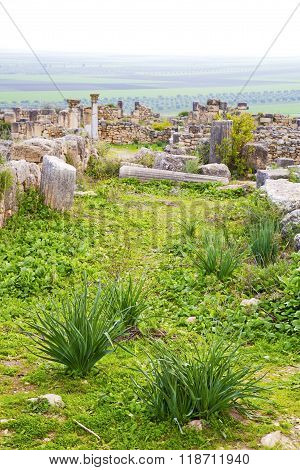 Volubilis  Morocco Africa The Old Roman Deteriorated Monument