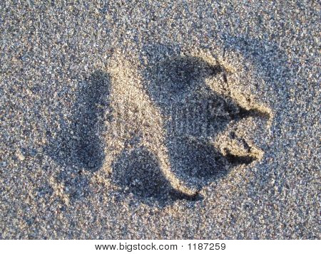 Dogs Footprint