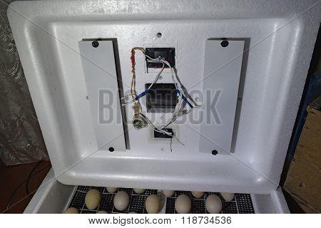 Internal Device Of A House Incubator.