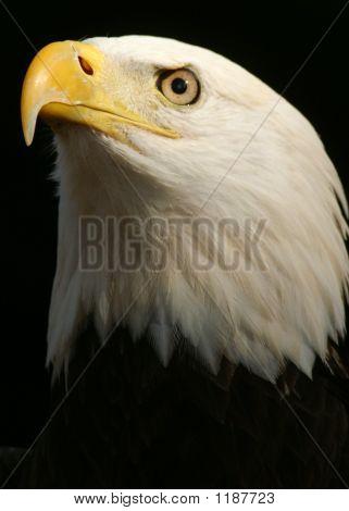 Bird 27