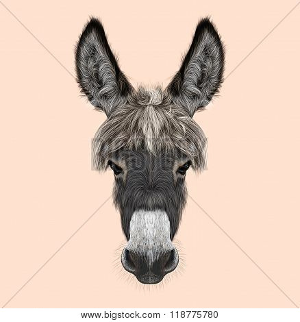 Farm Donkey Portrait