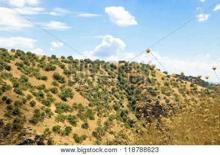 Golan Heights Landscape.