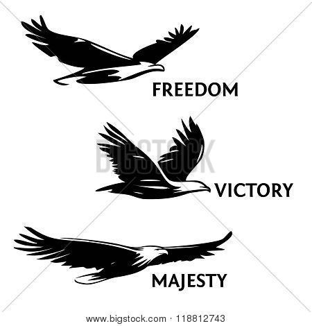 Set Eagles Painted Vector Photo Free Trial Bigstock