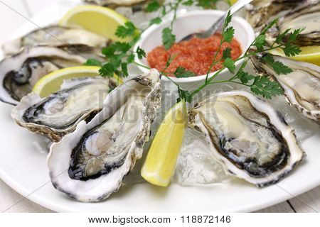 fresh oysters plate