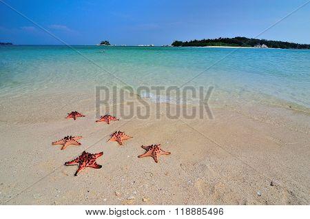 Six Red Starfish