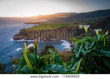 Flowers on the Sao Miguel coastline