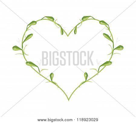 Beautiful Green Mistletoe In A Heart Shape