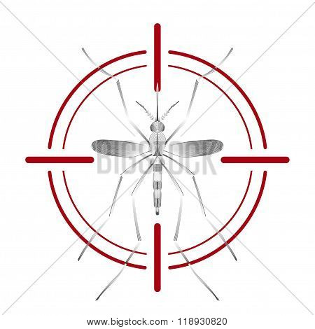 Fever mosquito species aedes aegyti in red aim isolated on white background