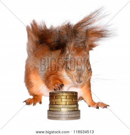 Squirrel and pail of coins isolated on white