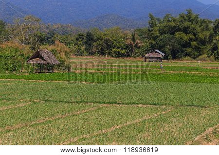 Green Field With Small House