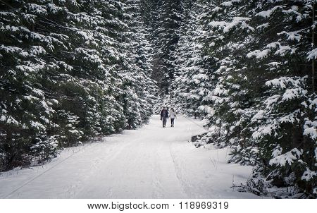 Couple In Winter Forest